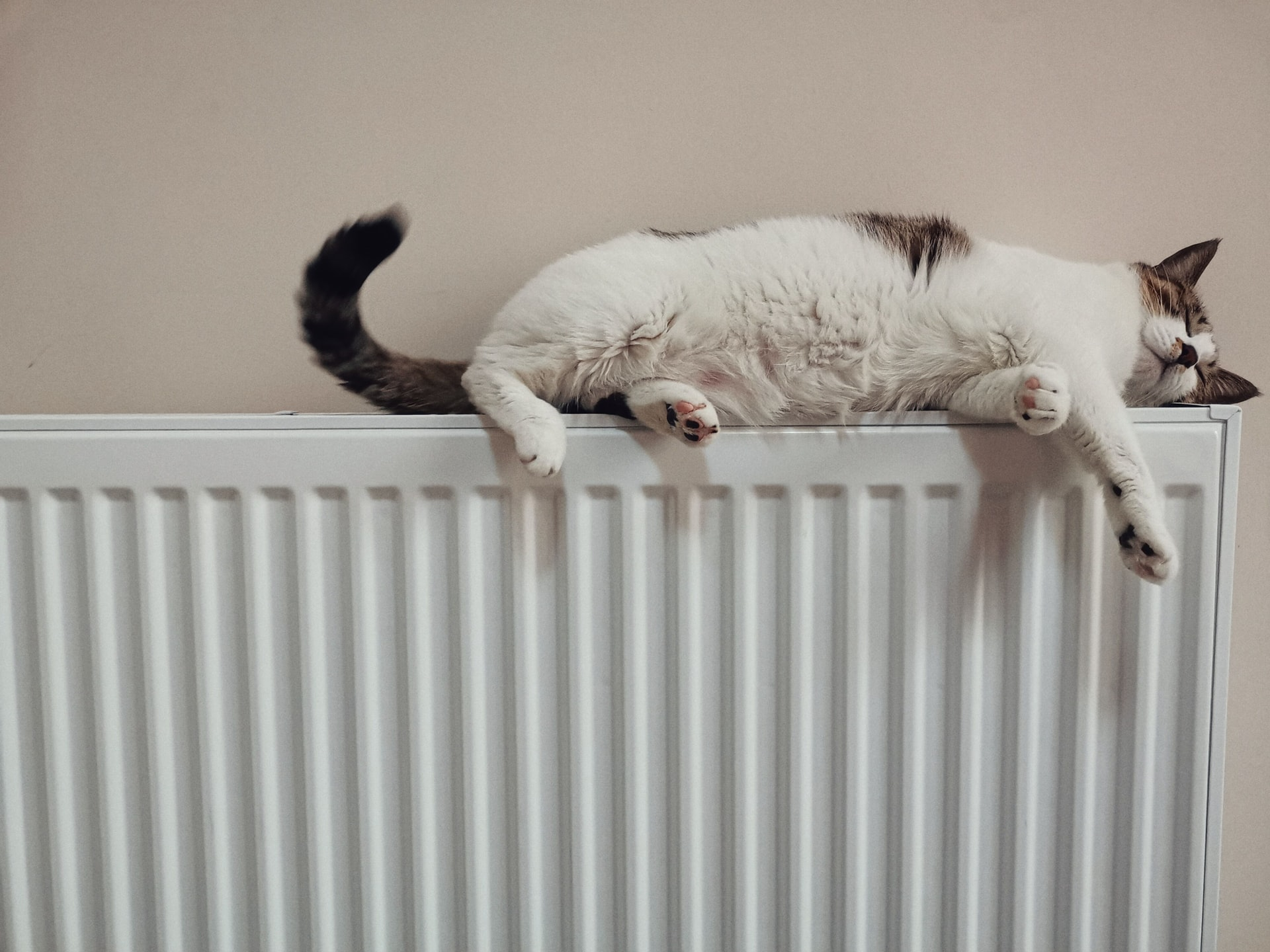 Cat over a radiator
